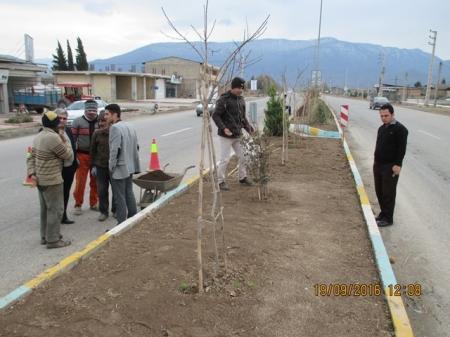 چمن کاری بلوار کشاورز شهر